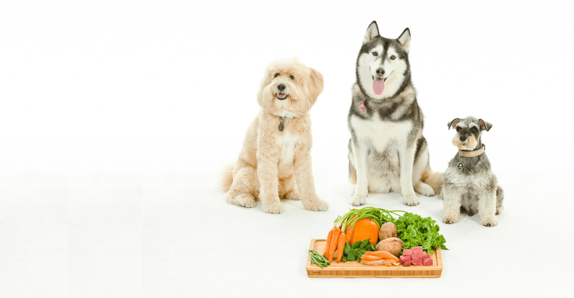dogalicious-dog-pack-with-fresh-food