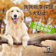 dogalicious-autumn-care-for-dogs
